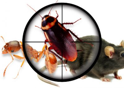 pest control services img 4